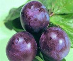 Сливово-вишневый гибрид СВГ