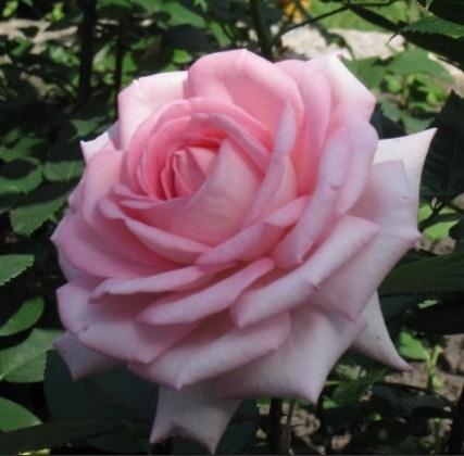 Роза Ева Руггиери - фото 8249