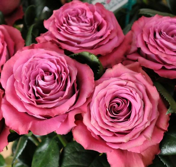 Роза Прешес Моментс - фото 8436