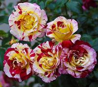 Роза Камиль Писсаро