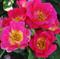 Роза Баяццо - фото 8300