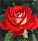 Роза Шанти - фото 8319