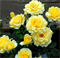 Роза Казино - фото 8369